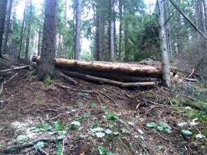 BOV logs